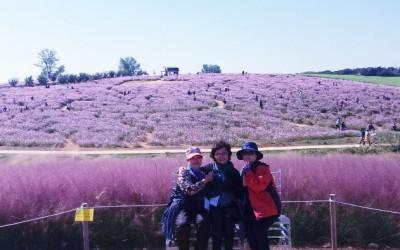 넓게 펼쳐진 예쁜 코스모스와 핑크뮬리 속에서 사진한장~!